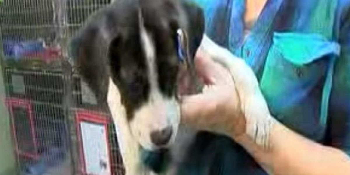 Jackson Co. Animal Shelter to host adoption event