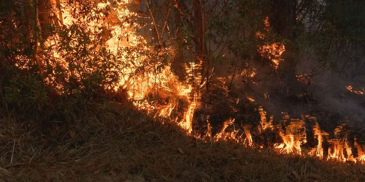 Family evacuated after major Stone County woods fire