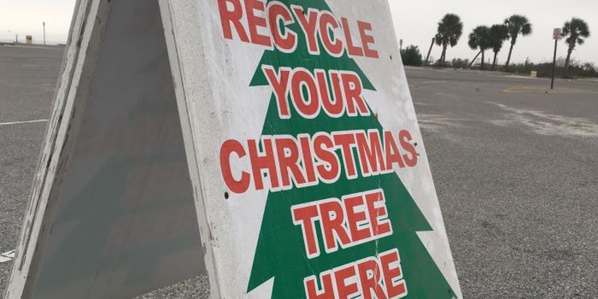 Tree recycling program starts Monday