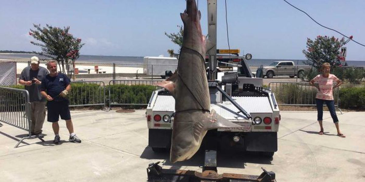 Record-breaking shark tips the scales at Deep Sea Fishing Rodeo