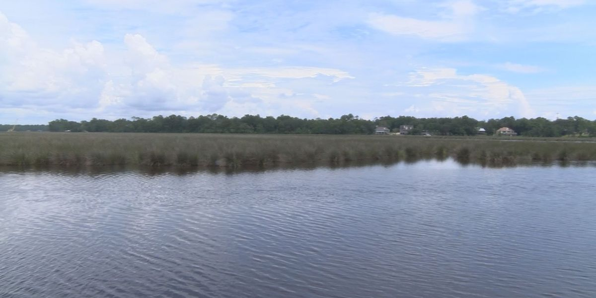 Dead dolphin found floating in Fort Bayou