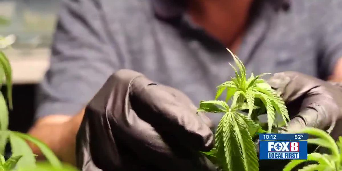 Medical marijuana available in La. next week, but advocates worry over accessibility