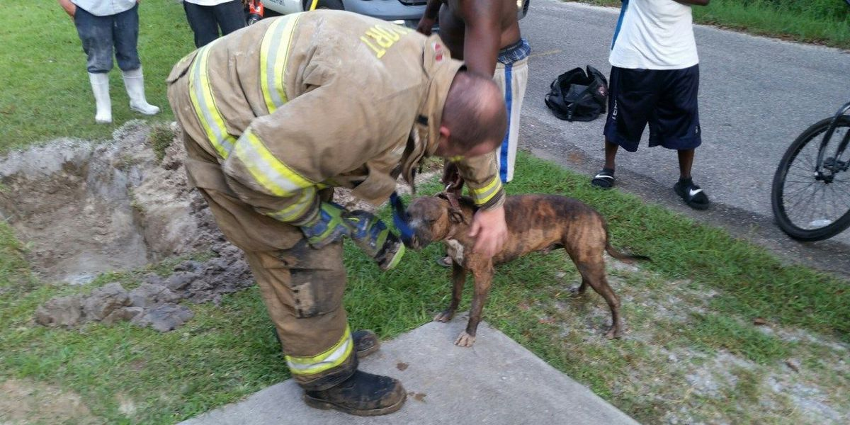 Gulfport firefighters, workers rescue dog trapped in concrete pipe