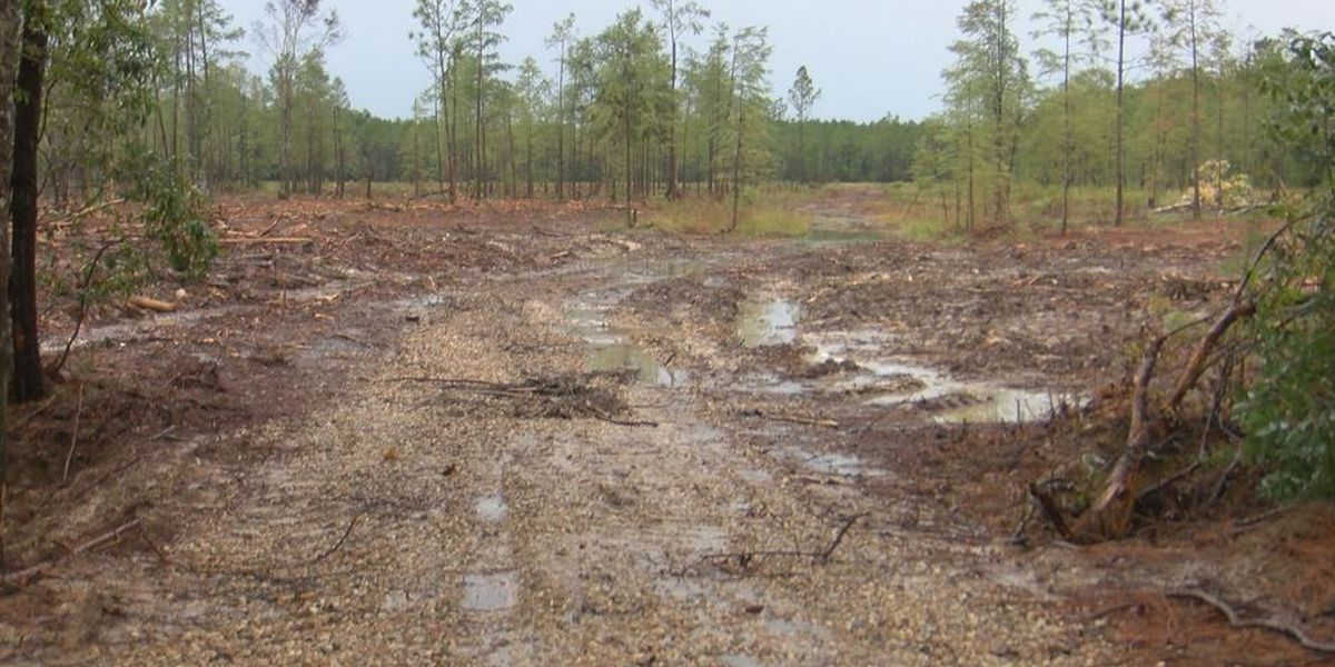 Public meeting to address concerns over land clearing along Turkey Creek