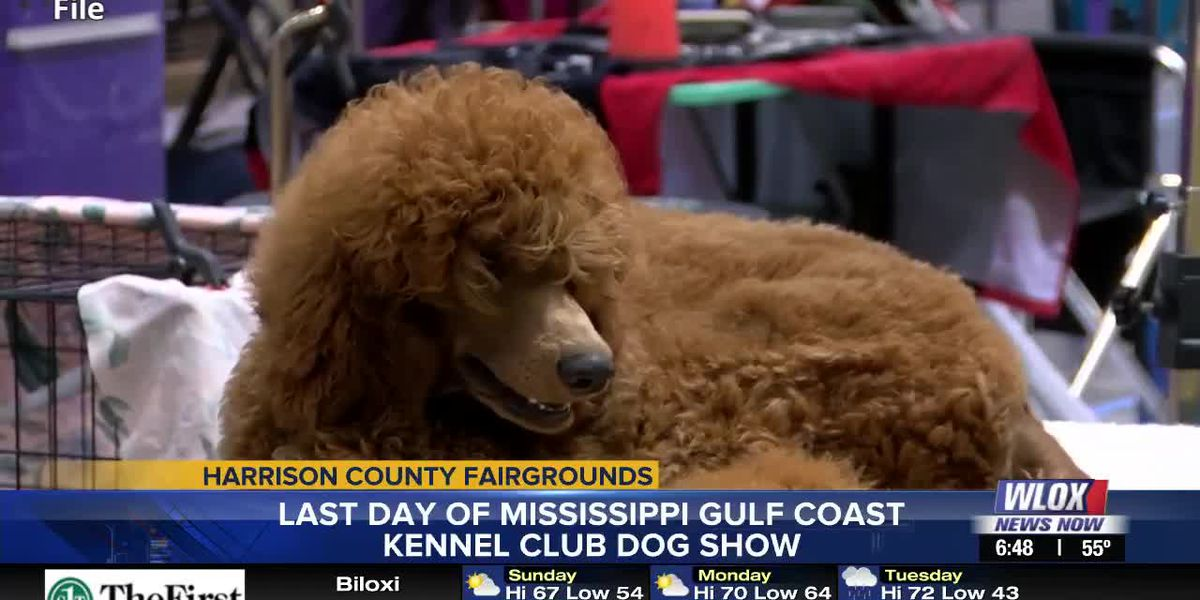 Pups take over Harrison County Fairgrounds