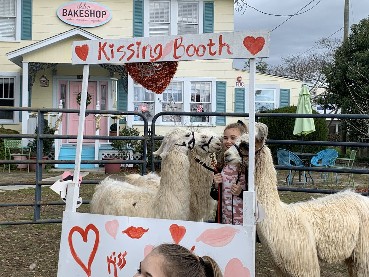 Long Beach bakeshop invited people out to pucker up with alpacas
