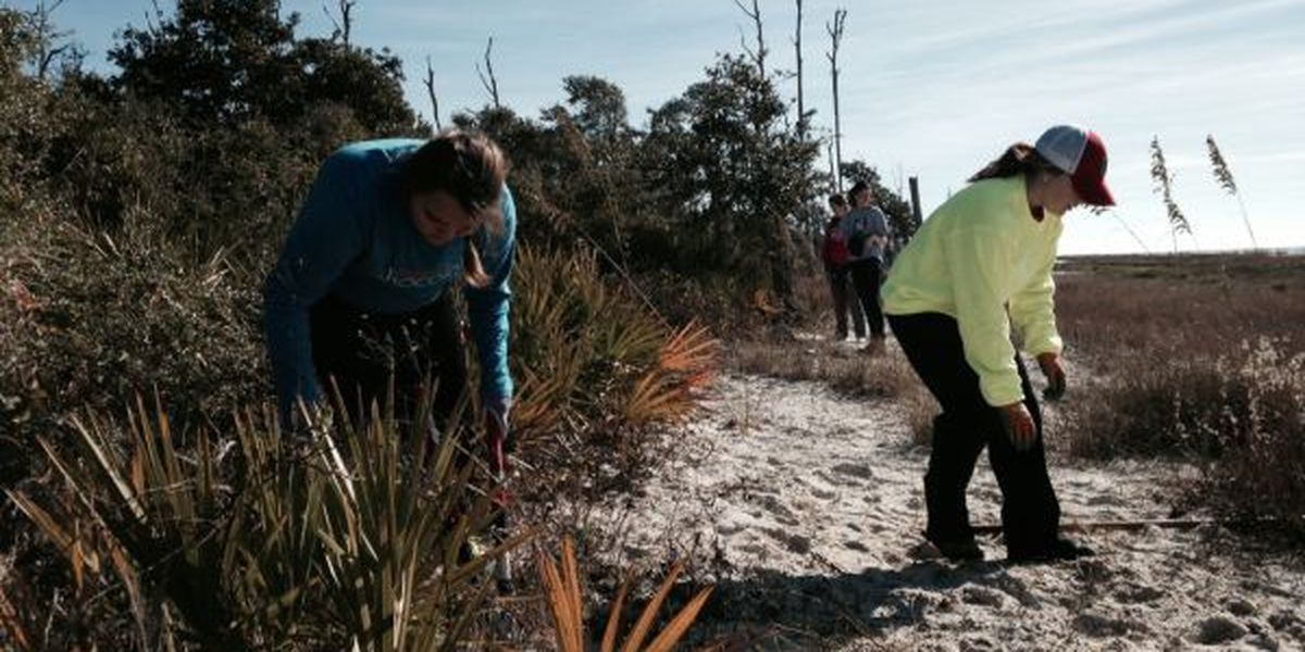 Ohio State students helping clear trails on Deer Island