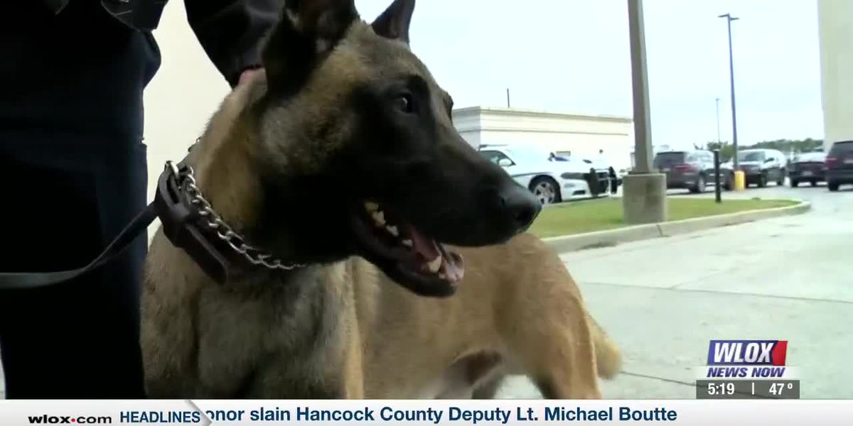 Gulfport PD's new canine cop sniffs out potential trouble