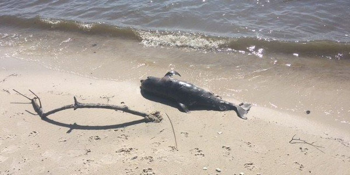 Runner discovers two dead dolphins on the Coast in Long Beach