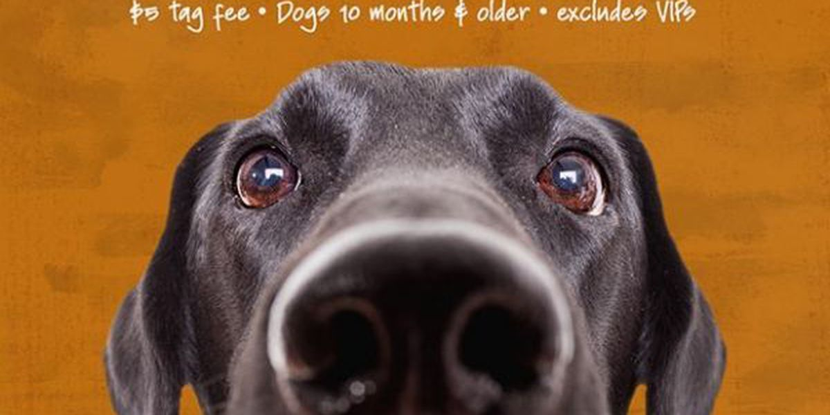 Help the Humane Society of South Mississippi Save Lives during $15 adoption special