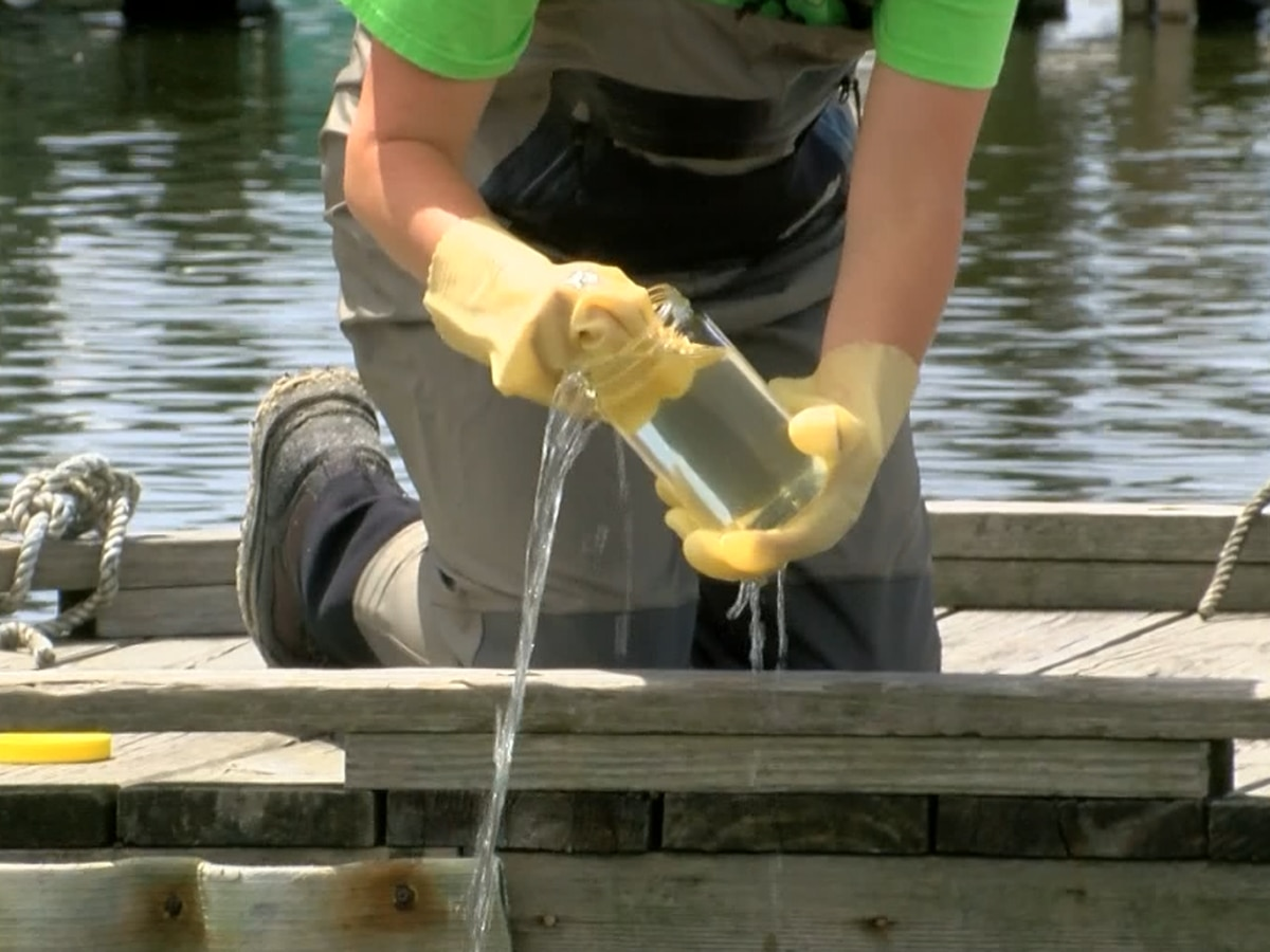 Marine scientists agree caution is the best approach to algae bloom