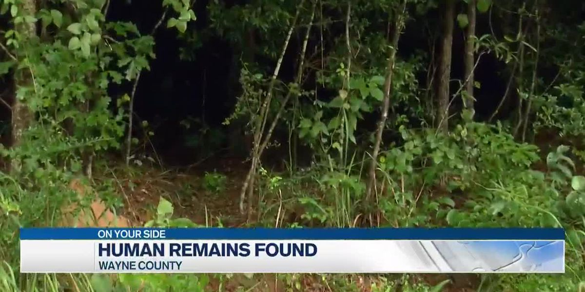 Human remains found in Wayne County