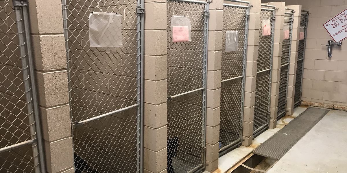 'Our goal was to stop the suffering:' Nonprofit said city turned down its offer to fix Jackson animal shelter