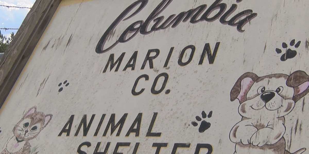 Columbia mayor says homeless animals will be euthanized in humane way