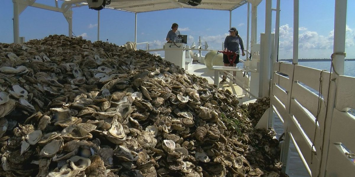 DMR hopes oyster cultch yields seafood dividends
