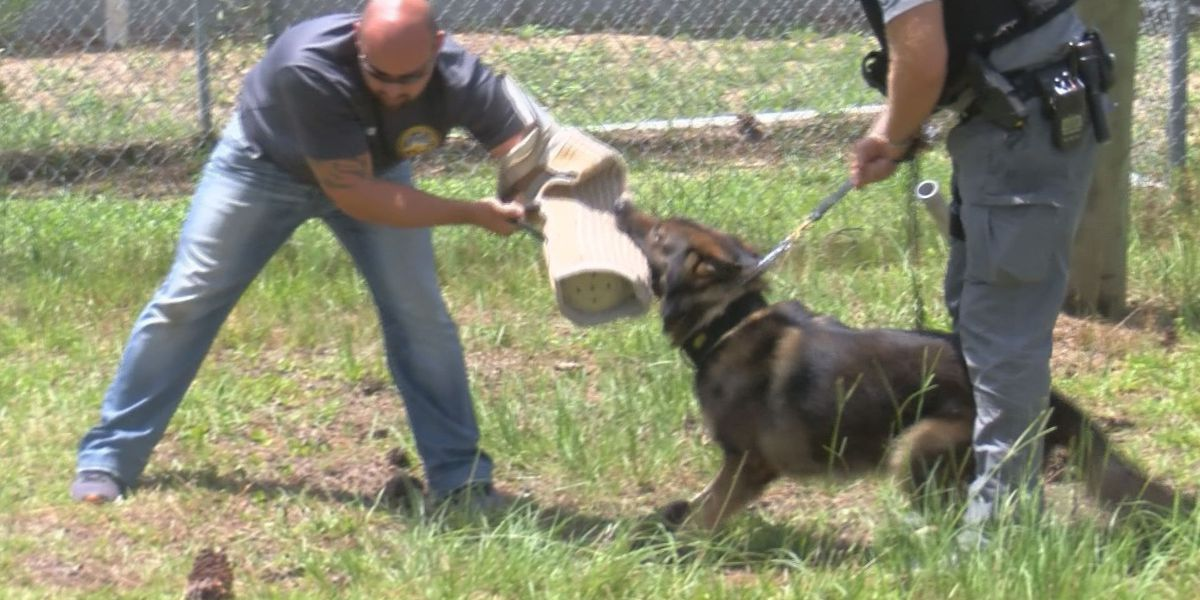 Harrison County K-9 Diablo corrals the criminal