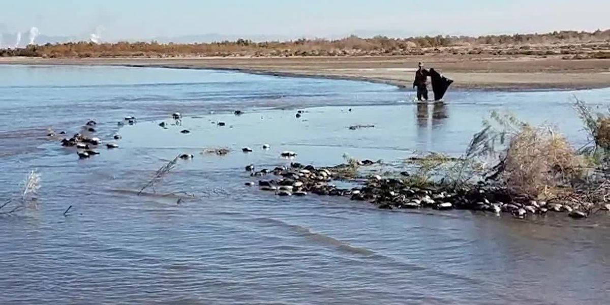 Avian cholera kills thousand of birds at California's Salton Sea