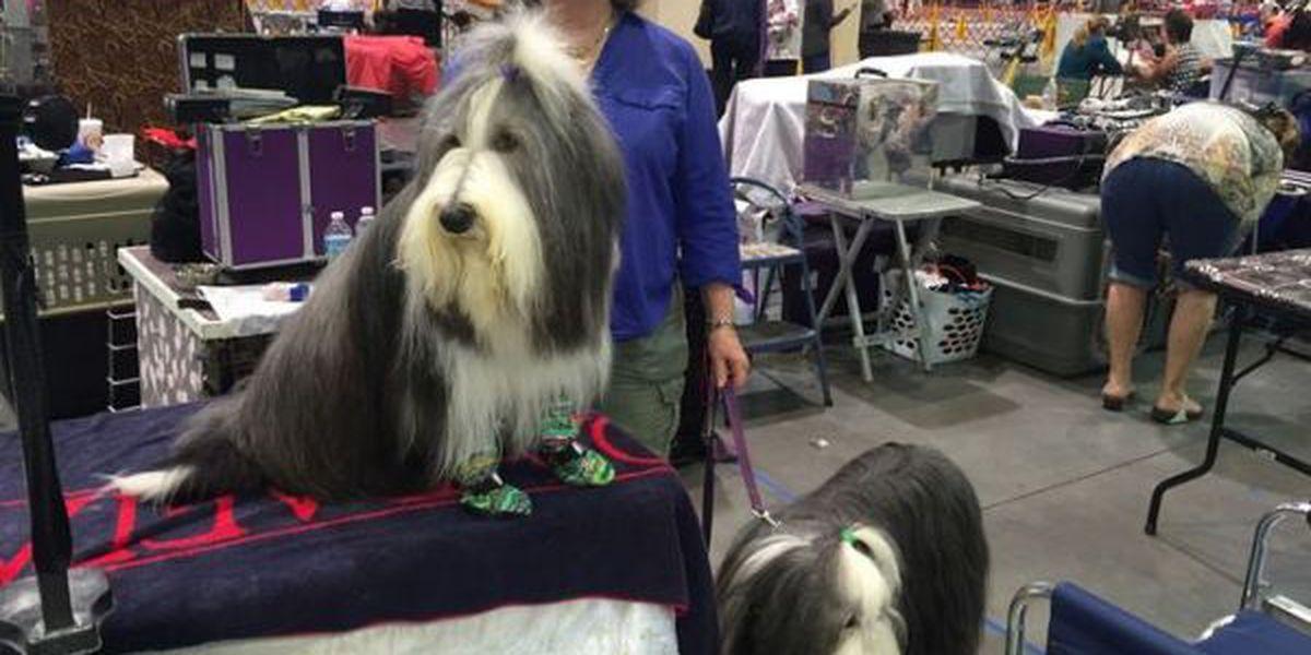 Organizers call Gulf Coast Classic AKC Dog Show a success