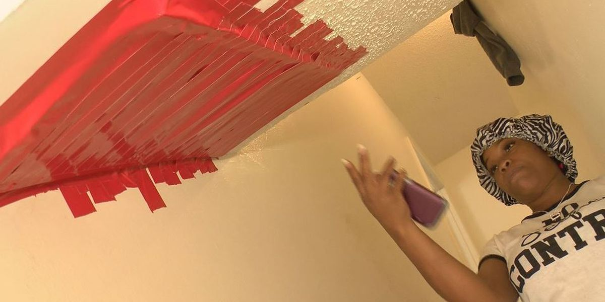 Gulfport woman tired of bats in her walls