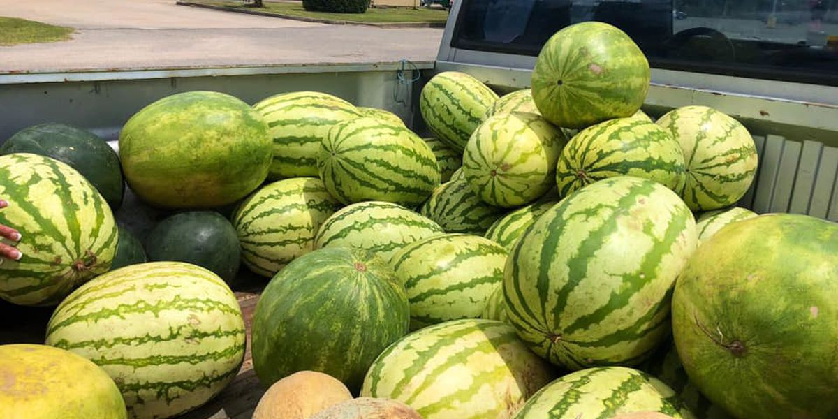 Local farmers cashing in on Fourth of July holiday