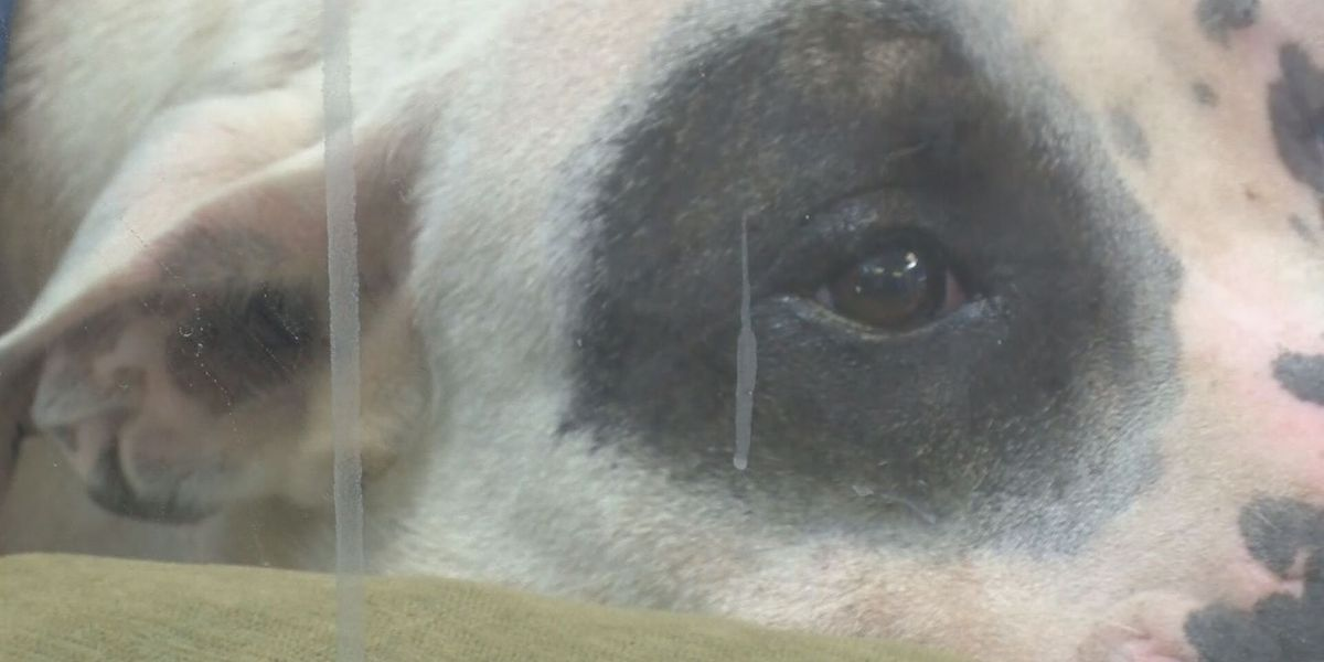 Mississippi sheriff: Allow adult charges for animal cruelty by juveniles