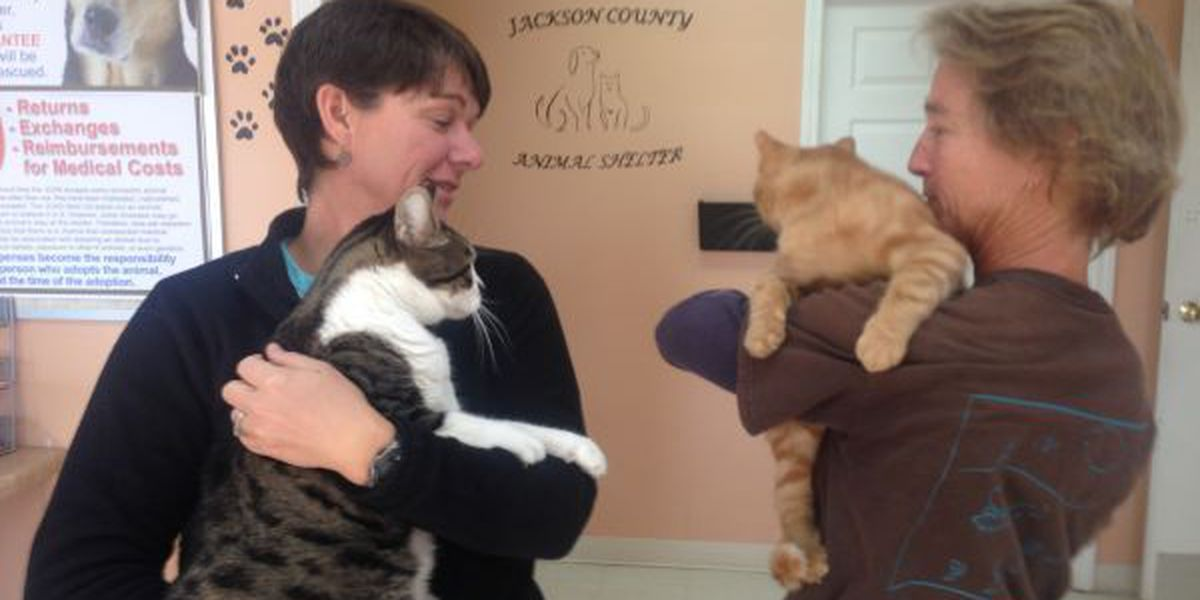 Flea market benefit provides much needed help to unwanted Jackson Co. pets