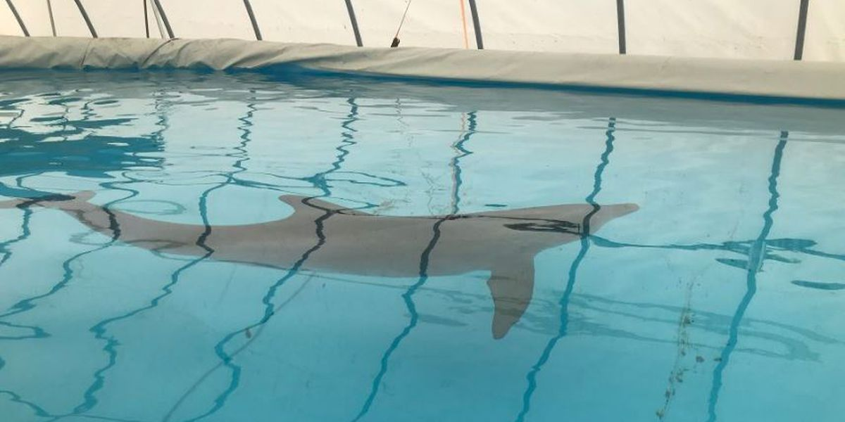 Dolphin making steady recovery at Institute for Marine Mammal Studies
